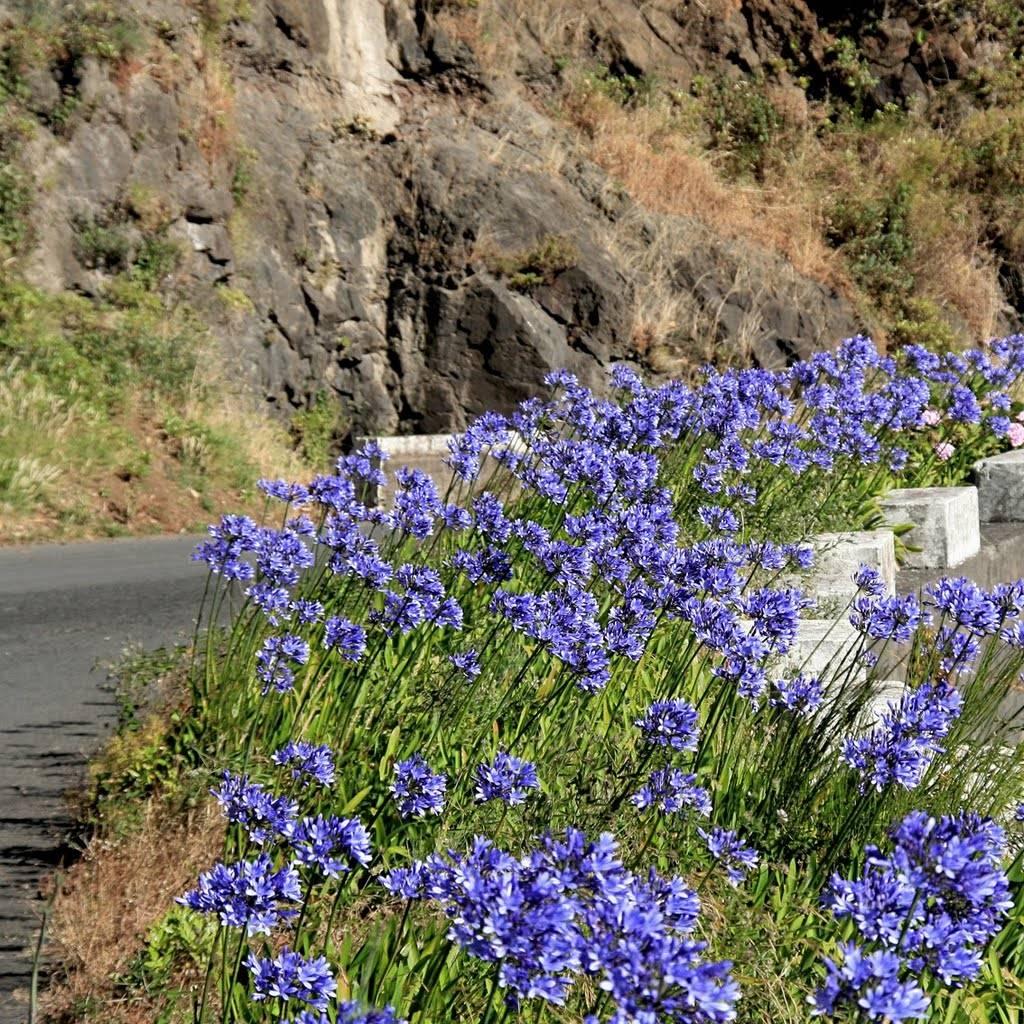 Kwiaty Madery Madera Kraina Wiecznej Wiosny